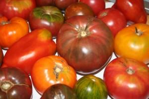 soorten-tomaten-planten